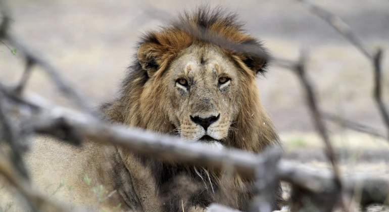 leon-africa-reuters.jpg
