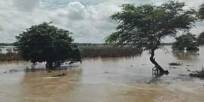 19,000 agricultores han sido empadronados para recibir bonos de emergencia