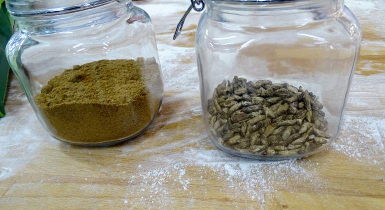 Lanzan un pan de insectos rico en proteínas