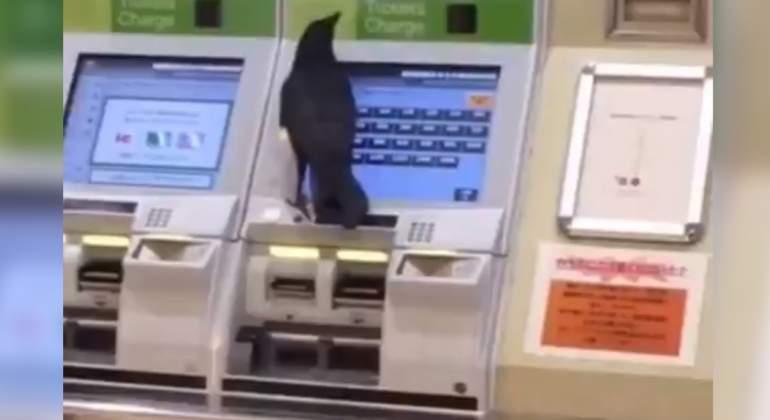 Cuervo-estacion-de-tren.jpg