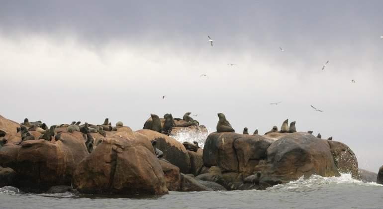 Los leones y osos marinos se han convertido en los superdepredadores por culpa del ser humano