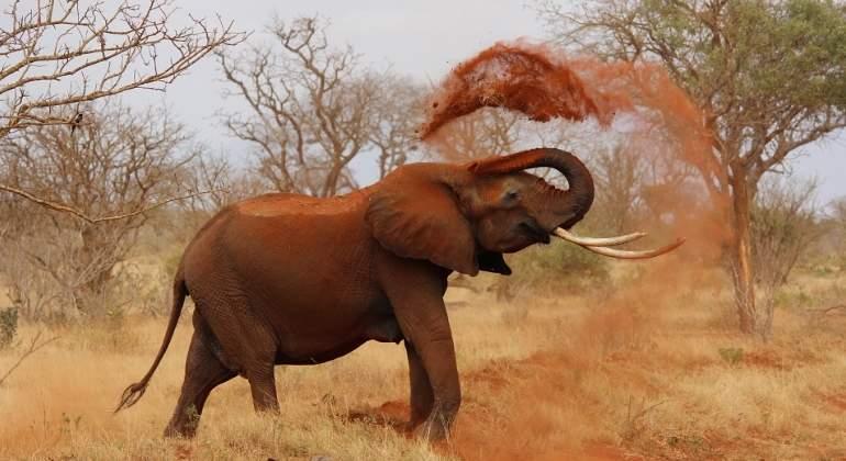 elefante-africano-770x420-pixabay.jpg