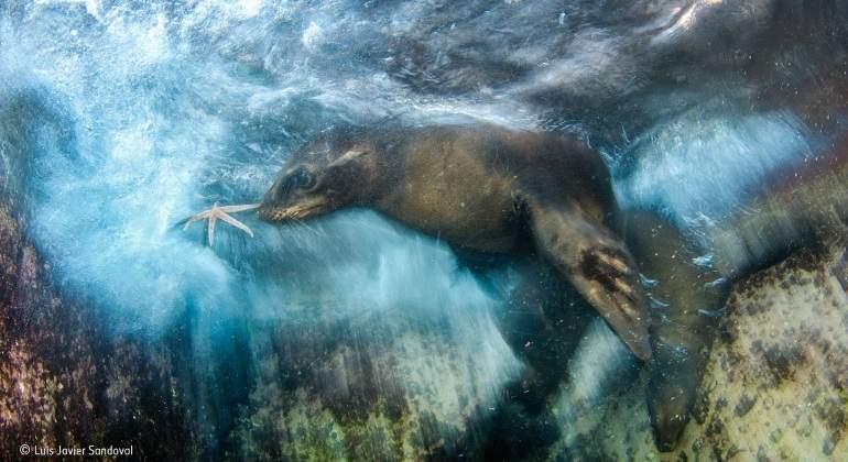 Mexicano gana concurso de fotografía ambiental por impresionante foto a león marino