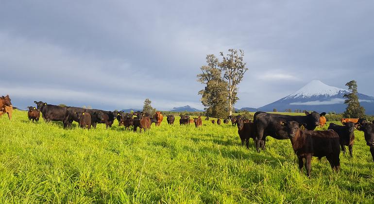 campo-vacas.nestle.archivo.png