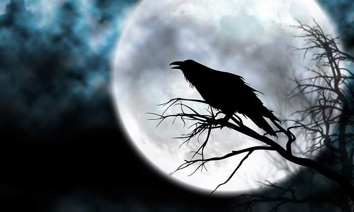 Image result for cuervos