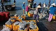 pesca-vietnam-puerto-770-dreamstime.jpg
