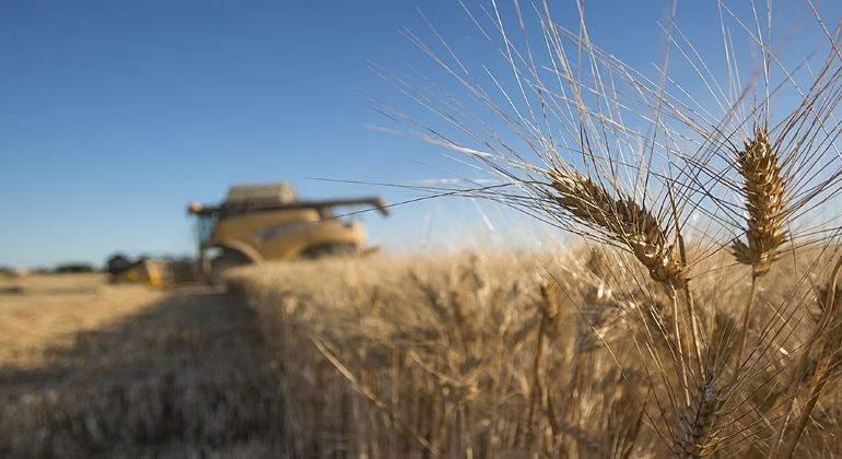 trigo-cultivo-770.jpg