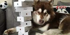 El hijo del CEO de Wanda le compra 8 iPhone 7 a su perro