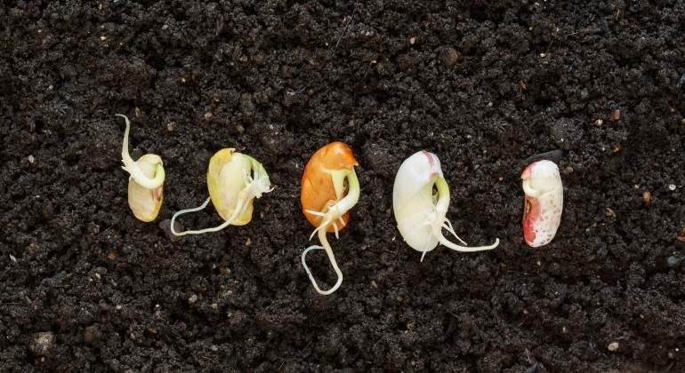 El deshielo amenaza la diversidad de  alimentos