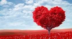 Sant Jordi: cuatro razones para decir más te quiero