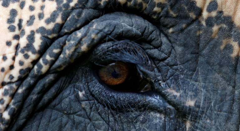 elefante-ojo-reuters.jpg