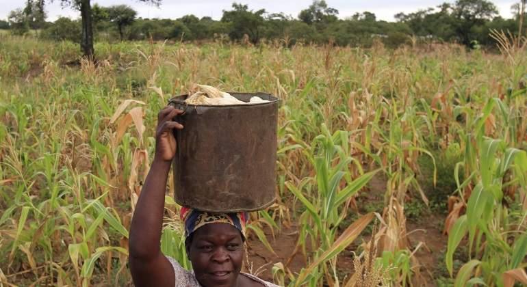 zimbabue-mazi.jpg