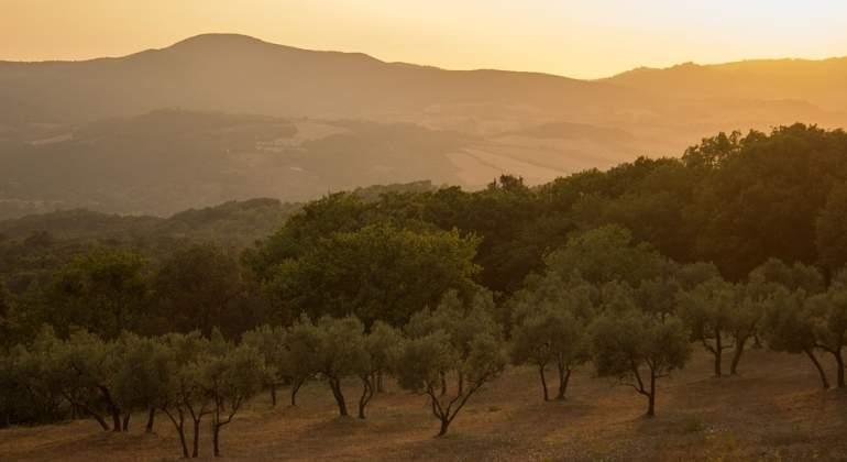 aceite-oliva-italia-pixaby.jpg