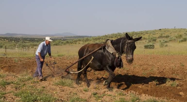agricultor-mula-extremadura.jpg