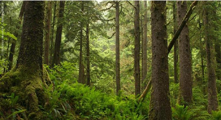 Hay veinte proyectos para recuperar los recursos de los bosques amazónicos