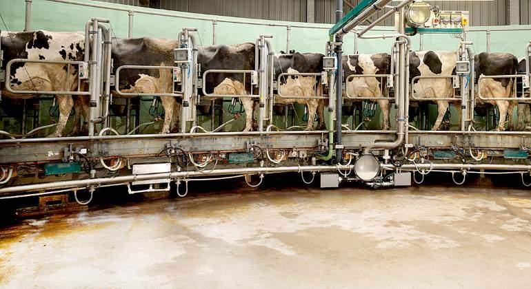 vacas-macrovaqueria-770-alamy.jpg