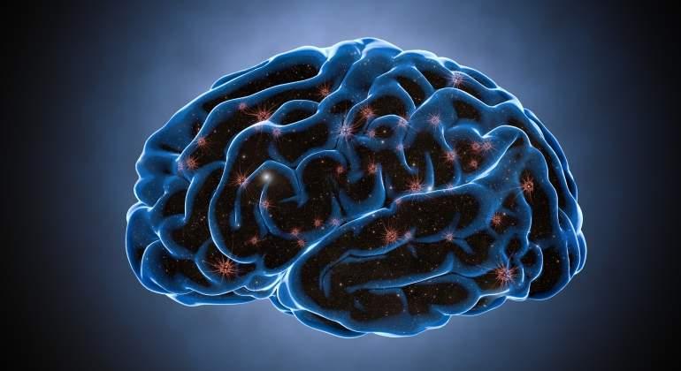 Identifican Neuronas En El Cerebro Que Controlan Si