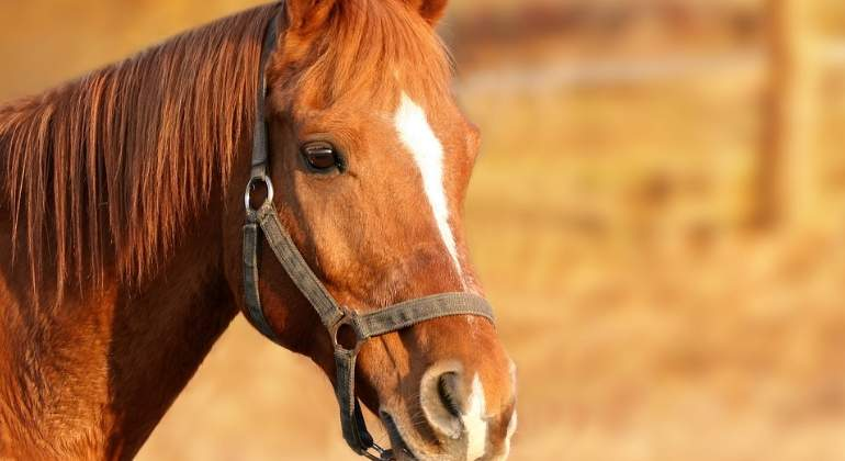caballo-770x420-pixabay.jpg