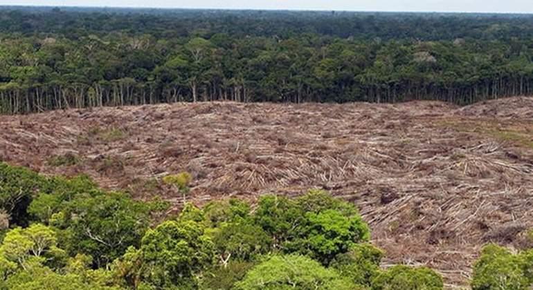 deforestacion colombia