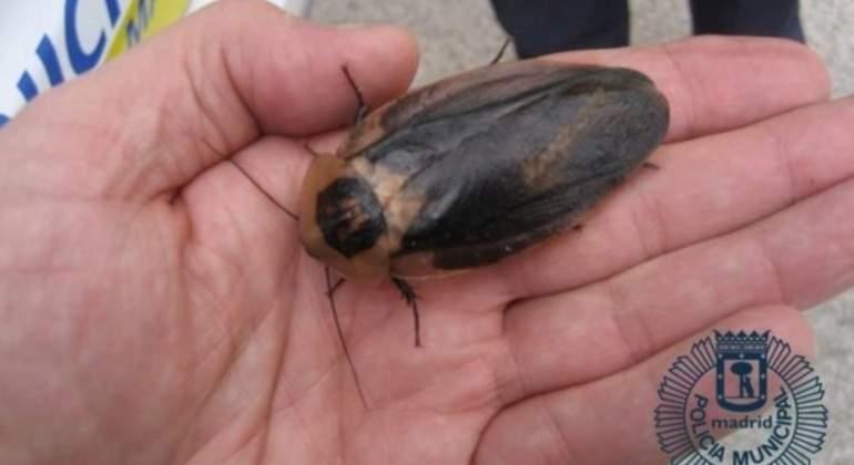 cucaracha-madrid-policia.jpg