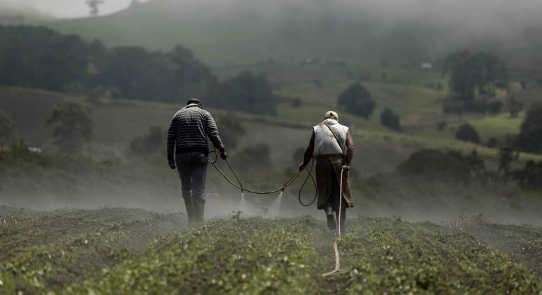 agricultura-efe-770x420.jpg