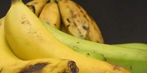 Exportación de bananas sumo US$ 128.8 millones entre enero y octubre