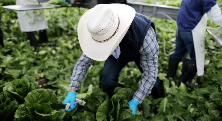 agricultor-migrante-lechuga-california-reuters.jpg