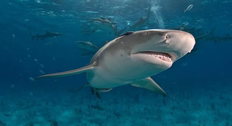 tiburon-limon-dreamstime.jpg