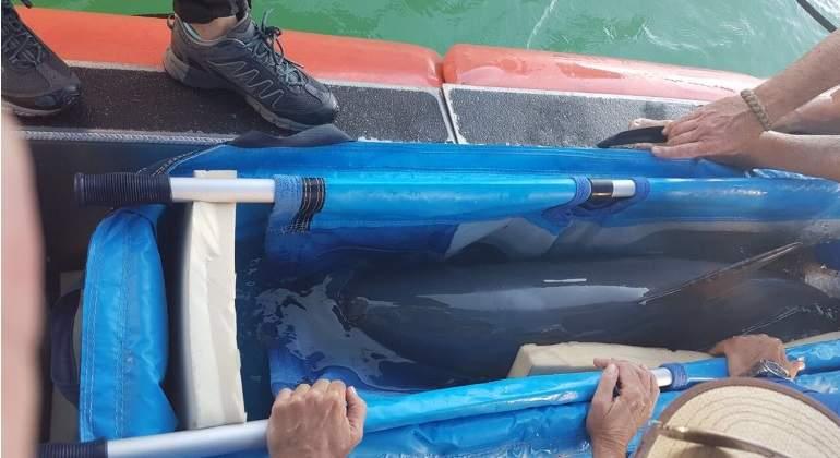 Vaquita-marina-770-reuters.jpg