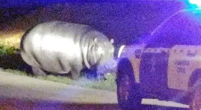 hipopotamo-efe.jpg
