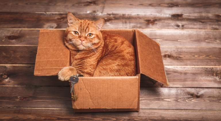 gato-mascota-caja-dreamstime.jpg