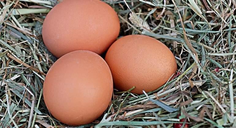 egg-1175620_1280.jpg
