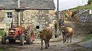 pueblo-campo-rural-vacas-770-dreamstime.jpg