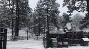 Nieve-Chihuahua-especial.jpg