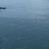 mar-contaminacion.chile.archivo.png
