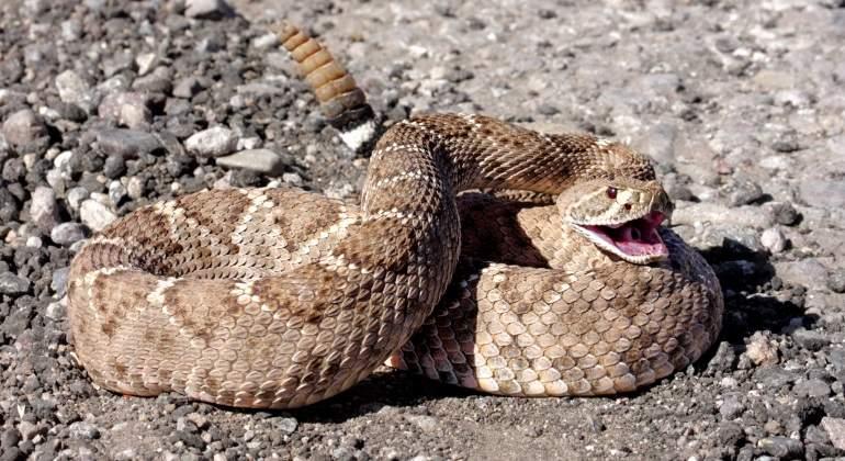 serpiente-cascabel-dreamstime.jpg