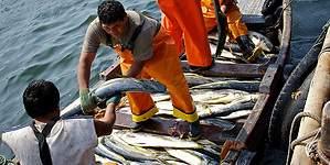 Producto Bruto Interno del sector pesca creció 28% en el mes de septiembre