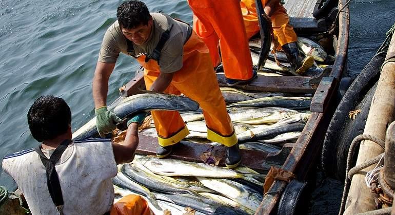 Producto bruto interno del sector pesca creci 28 en el for Interno 28