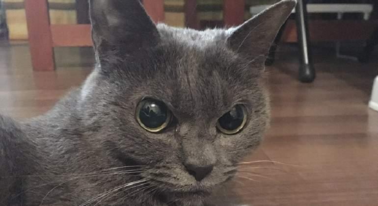 always-angry-cat-Shamo-9-59afa0e36fa3b__700.jpg