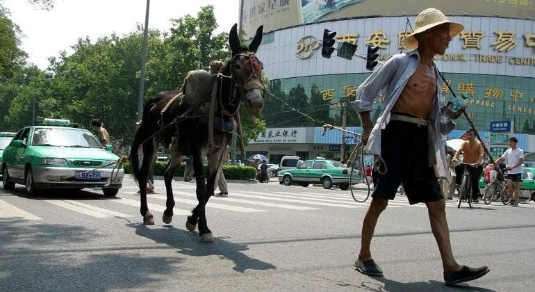 burro-xian-china.jpg