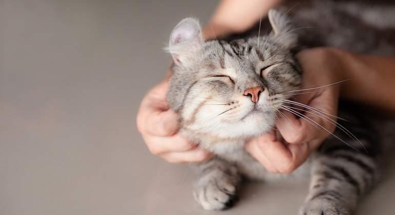 ¿Sabes interpretar el comportamiento de tu gato? Comprueba si realmente le entiendes