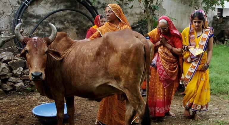 vaca-india-reuters.jpg