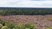 amazonas-reuters.png