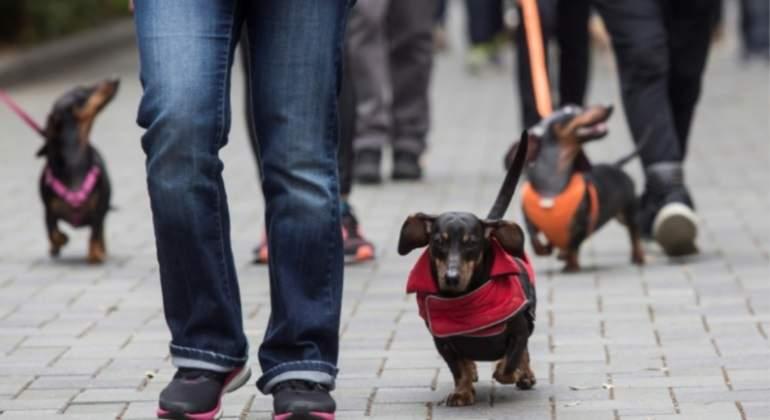 marcha-hong-kong-china-perros-salchicha-afp-770x420.jpg