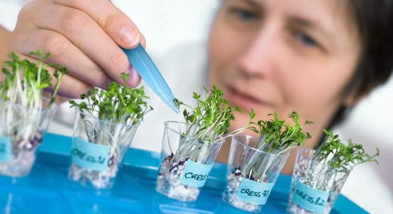 plantas-investigacion.jpg