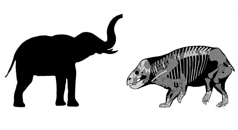 mamifero-elefante-dinosaurios-reuters-770.jpg