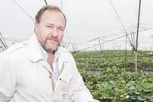 Sería un éxito que la mitad de las fresas de Huelva fueran autóctonas en diez años