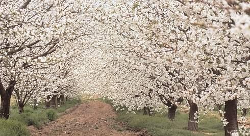 Llega la primavera y... ¡es la mejor época para viajar!