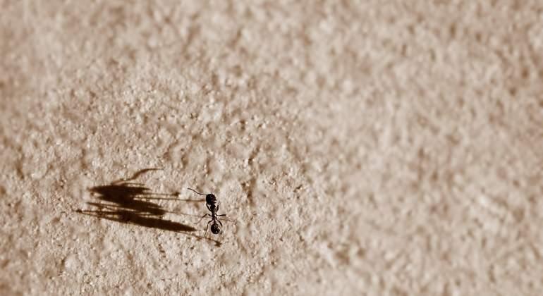 Las hormigas se orientan tomando referencias terrestres y estelares cuando van hacia atrás