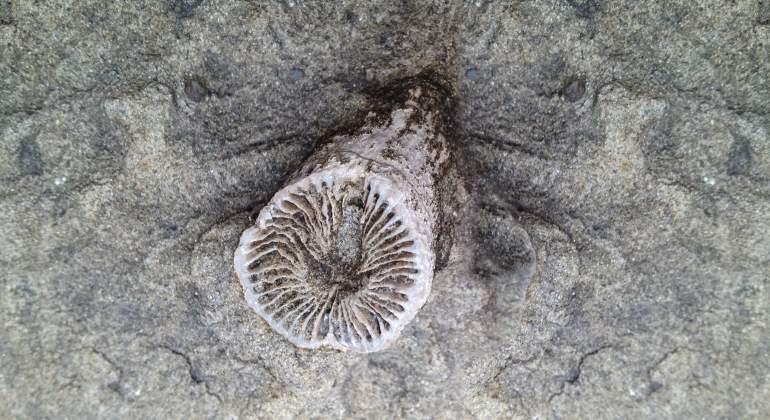 fosil-permico-dreamstime.jpg